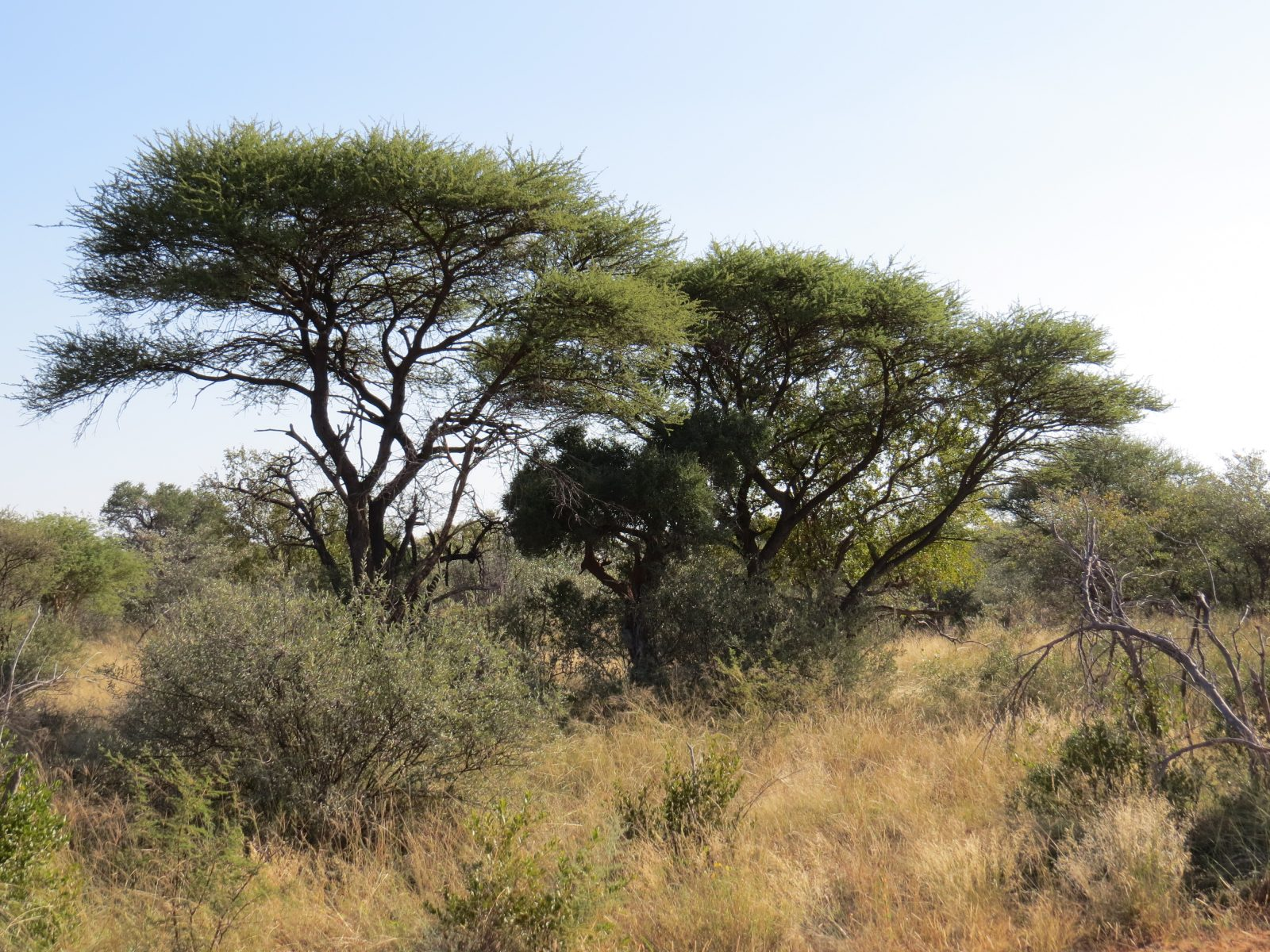 Trees in the bush. Photo by Chivic African Safaris.